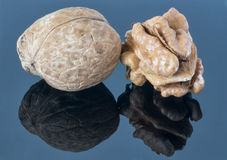 Walnut kernel on a dark background. With reflection in the foreground. Stock Images