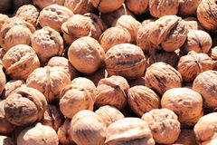 Walnut kernel Royalty Free Stock Photo