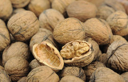 Walnut kernel and whole walnuts Royalty Free Stock Images