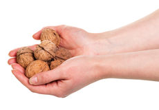 Walnut kernels in the hands isolated on white Stock Photography