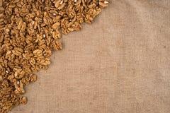 Walnut kernels walnuts on burlap. Stock Photos