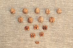Walnut kernels and whole walnuts. On burlap Stock Images