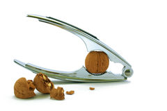 Walnut and  kitchen device Stock Photography