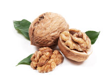 Walnut with leaf Stock Photography