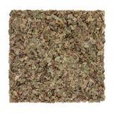Walnut Leaf Herb Stock Images