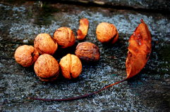 Walnut and leaf Royalty Free Stock Photo