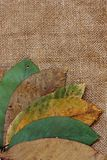 Walnut leaves autumnal background Stock Photo