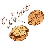 Walnut. Logo in retro style with a name drawn by hand in retro styles Stock Images