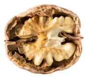Walnut nucleus isolated on the white background.  royalty free stock photos