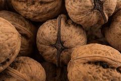 Walnut nut closeup Royalty Free Stock Photos