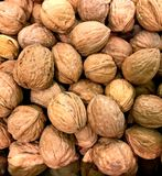 WALNUT, Nut, English, Sold n Bulk. There is also a Persian variety, which is used in Middle Eastern Cuisine royalty free stock image