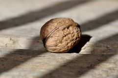 Walnut, Nut, Fruit Bowl, Healthy Royalty Free Stock Images