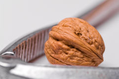 Walnut & Nutcracker Stock Images