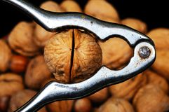 Walnut in a nutcracker, Stock Image