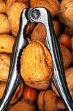 Walnut in nutcracker. Stock Photos