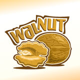 Walnut nuts. Vector illustration on the theme of the logo for walnut nuts, consisting of nut-in-shell and half of the peeled kernel of the nut Stock Photography