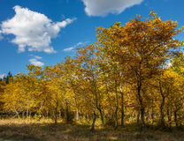 Walnut orchard in the autumn Royalty Free Stock Photos