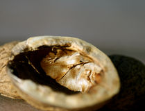 Walnut peel. Some walnut peels. Cracked walnut stock photography