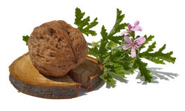 Walnut and pelargonium Stock Photos