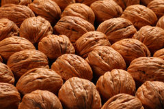 Walnut Royalty Free Stock Photography