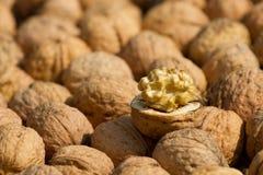 Walnut pile. On background texture Royalty Free Stock Photos
