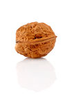 Walnut on reflected background Royalty Free Stock Photography