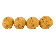 Walnut regular line Royalty Free Stock Photo