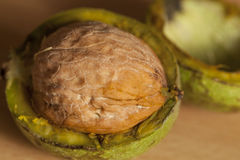 Walnut ripe Stock Images