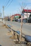 Walnut seedlings planted along road Royalty Free Stock Photo