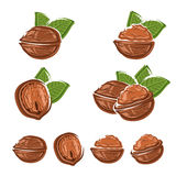 Walnut set. Vector Royalty Free Stock Photography