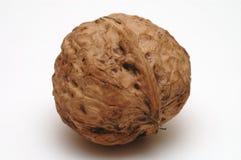 Walnut shell. It is a walnut, isolated Stock Image