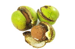 Walnut in shell burst Stock Images