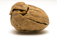 Walnut shell cracked Royalty Free Stock Images