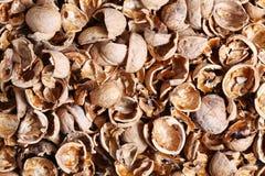 Walnut shell Royalty Free Stock Photo