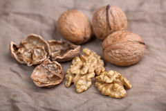 Walnut without shell, and nuts in the shell. Walnut without shell close-up, and nuts in the shell Royalty Free Stock Photos