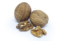 Walnut and shell Stock Image