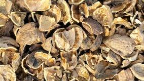 Walnut shells. Golden brown cracked open walnut shells Royalty Free Stock Photo