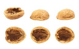 Walnut shells isolated Stock Photo