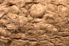 Walnut texture, closeup Stock Photos