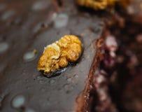Walnut on a top handmade cake Royalty Free Stock Image