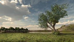 Walnut tree Stock Photography