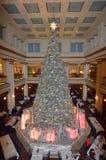 Walnut Tree Royalty Free Stock Images