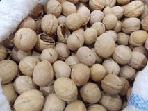 Walnut, walnut from a tree. resh nut fruits in a bag royalty free stock image