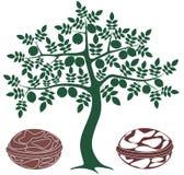 Walnut tree. Vector illustration (EPS 10 vector illustration