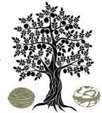 Walnut tree Royalty Free Stock Photography