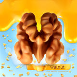 Walnut vector background Royalty Free Stock Images