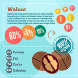 Walnut and vitamins  infographics in a flat style. Vector illustration EPS 10 Royalty Free Stock Photo