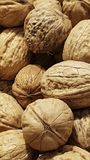Walnut. For backgrounds or textures. Close-up crustacean with shell royalty free stock photos