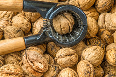 Walnut Royalty Free Stock Images
