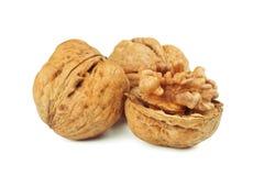 Walnut. S on a white background Stock Image